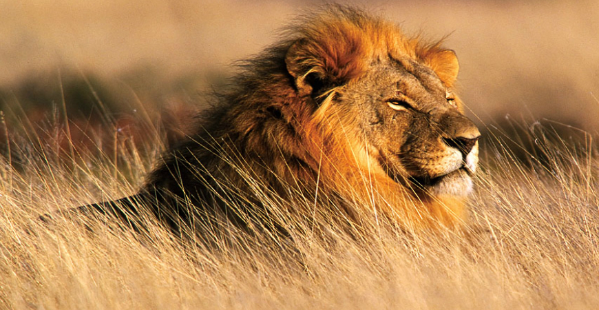 Tiere In Afrika Pictures To Pin On Pinterest